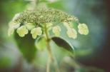 Tag 008 | 23.09.2014 Kein Projekt ohne Blumen