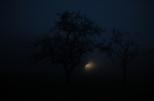 Tag 085 | 09.12.2014 Auto und Baum im Nebel, bin ich froh wenn es wieder länger hell bleibt...